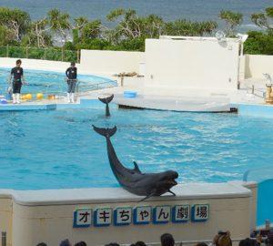 美ら海水族館 オキちゃん劇場 オキちゃんは何と40歳だったことが判明